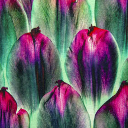 Digital print: Tulip scales organic jersey, hot pink - light green